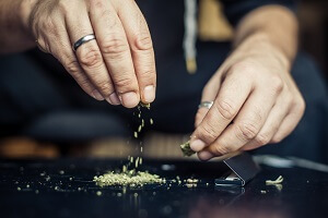 Cannabis: It's Complicated